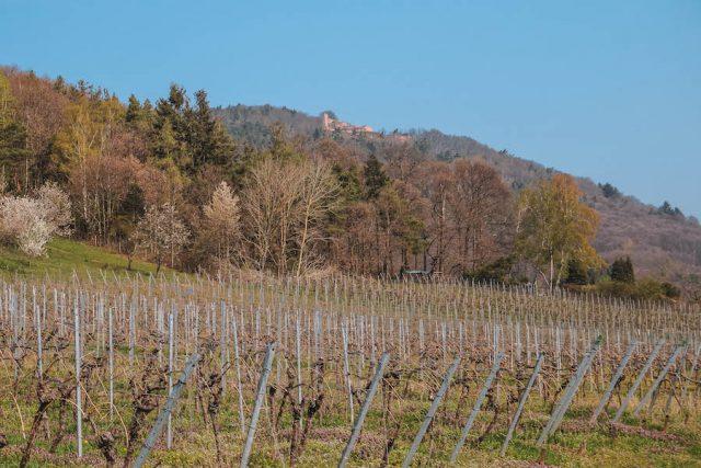 Weinberge Suedliche Weinstrasse