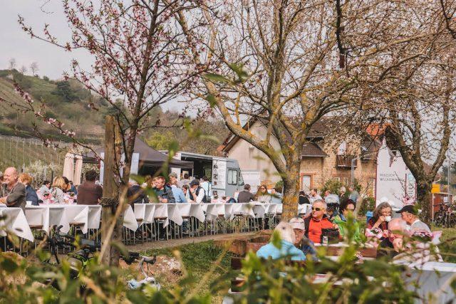 Weiss Rosa Kaffeetafel Burrweiler Ausflugsziele Pfalz