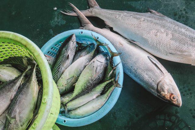 Frischer Fisch Thailand