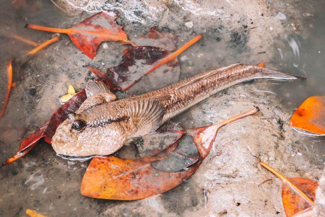 Mu Koh Chumphon Fisch