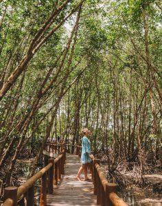 Mu Koh Chumphon Mangroven