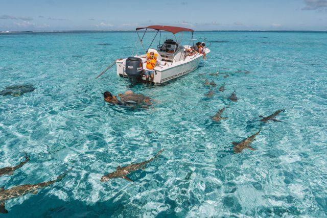 Bora Bora Urlaub Suedsee Schnorcheln Haie