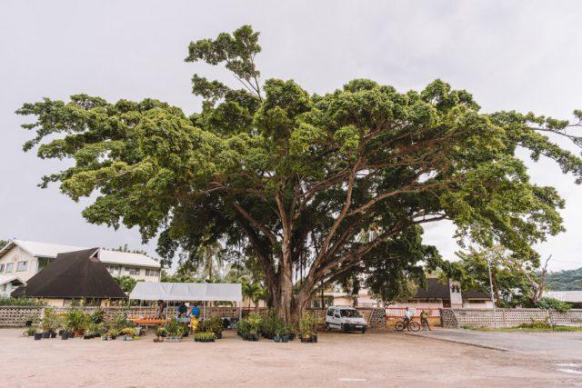 Bora Bora Vaitape Village Baum
