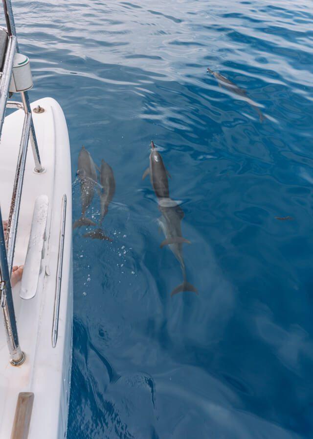 Segeltour Suedsee Delfine