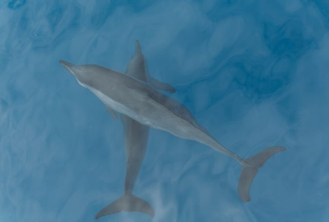 Suedsee Delfine Segeln