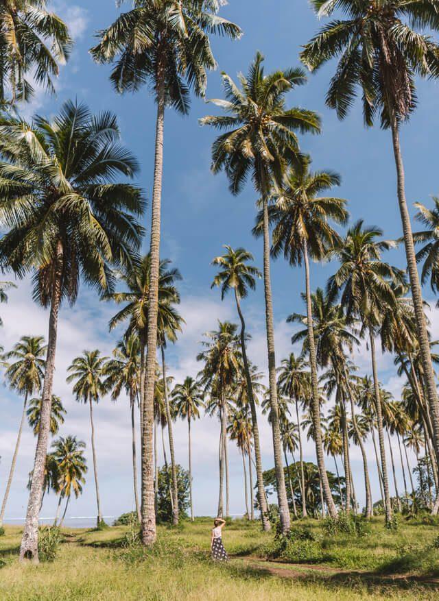 Suedseeinsel Palmen