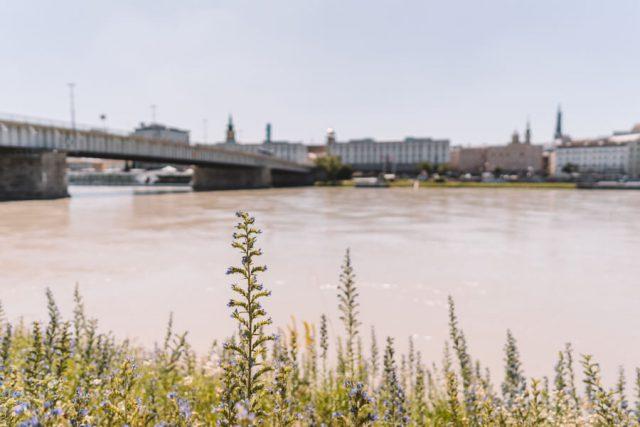 Donaustrand Alt Urfahr