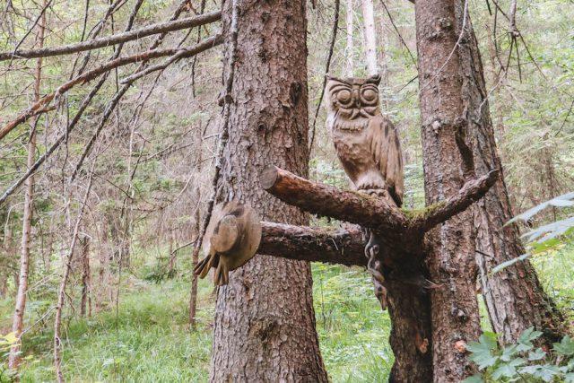 Eule Holz Wandern Wald