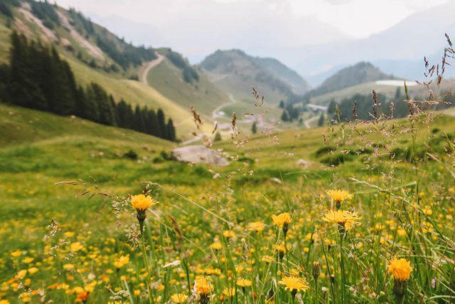 Urlaub in Tirol Wildseeloder Wiese