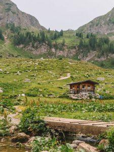 Waiwi Tirol