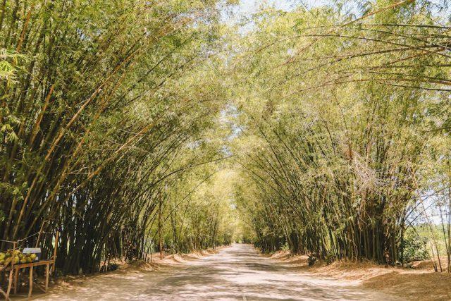 Jamaika Sehenswuerdigkeiten Bambusallee