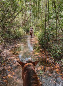 Jamaika reiten Dschungel