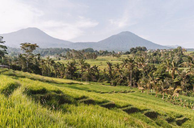 Bali Sehenswuerdigkeiten Jatiluwih Reisterrassen Panorama