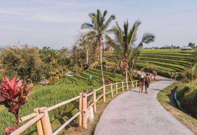 Bali Sehenswuerdigkeiten Jatiluwih Reisterrassen Rundweg
