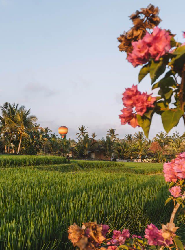 Ballonfahrt Reisfelder