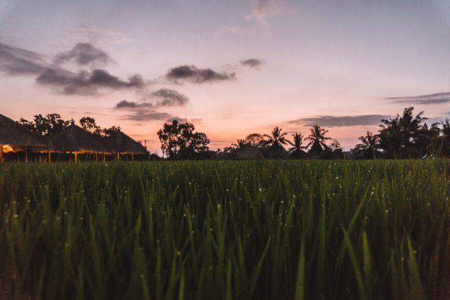 Reisfelder Abendhimmel