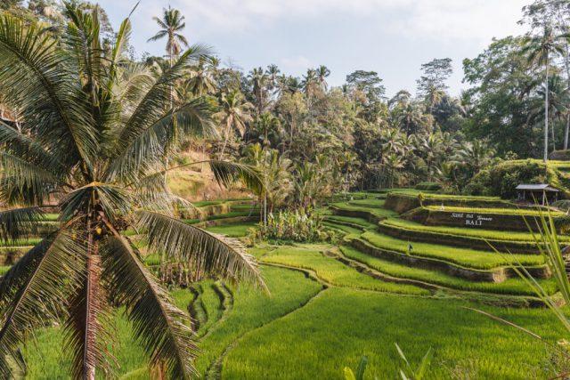 Tegallalang Reisterrassen Ubud Bali
