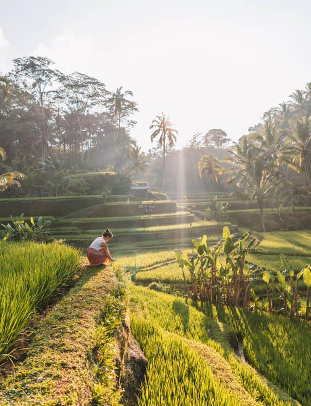 Ubud Bali Reisterrassen Tegallalang