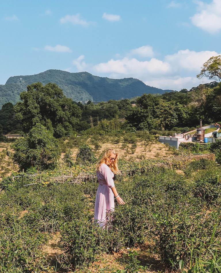 Teeplantage Taiwan