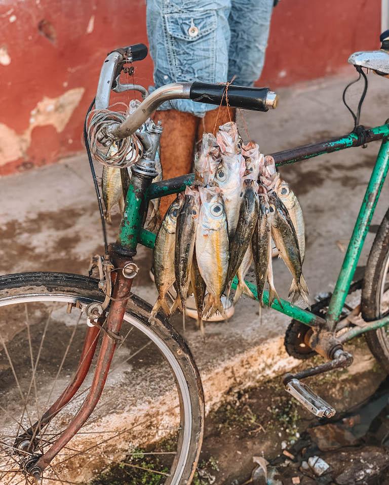 Fischverkauf Kuba