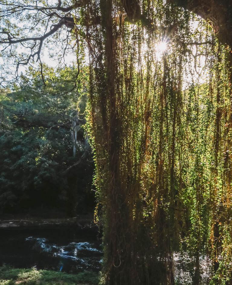 Havanna Sehenswuerdigkeiten Parque Almendares