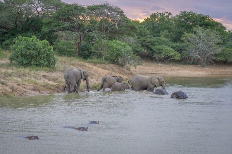 Reiseziele Juli Safari Namibia