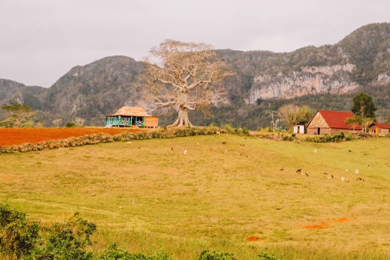 Valle de Vinales Natur