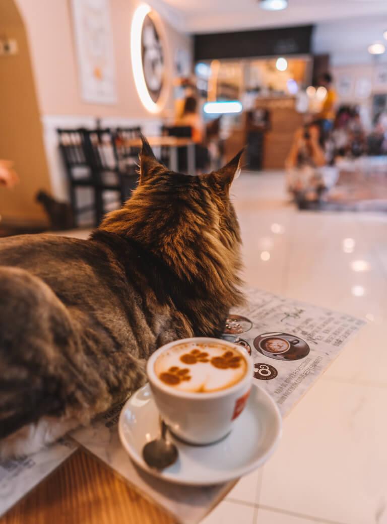 Cat Cafe Budapest Katzencafe