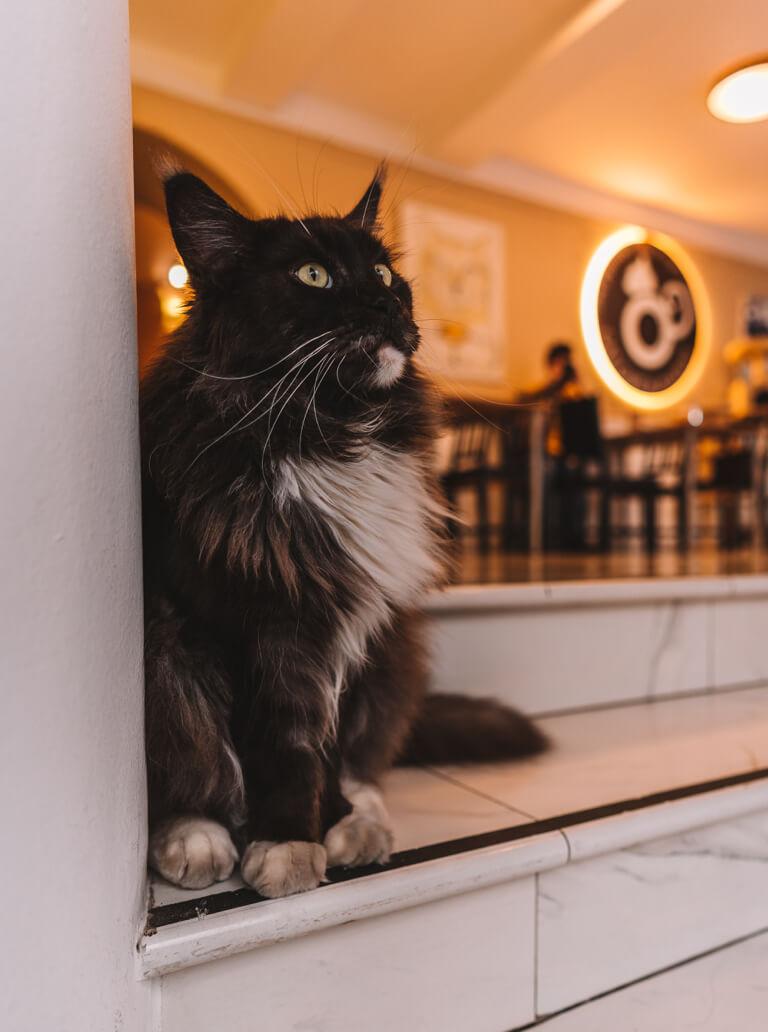 Katzencafe Budapest Cat Cafe