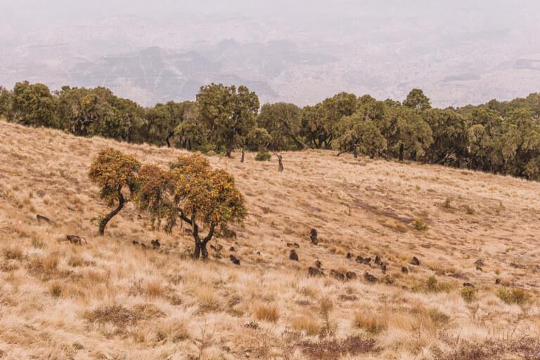 Simien Gebirge Aethiopien