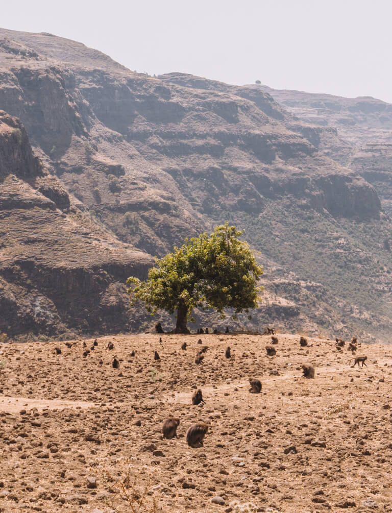 Simien Mountains Landschaft