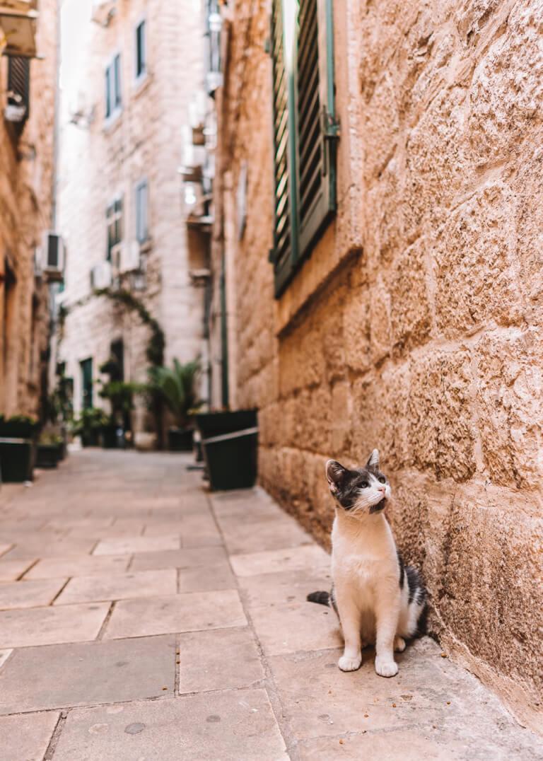 Katze Adria