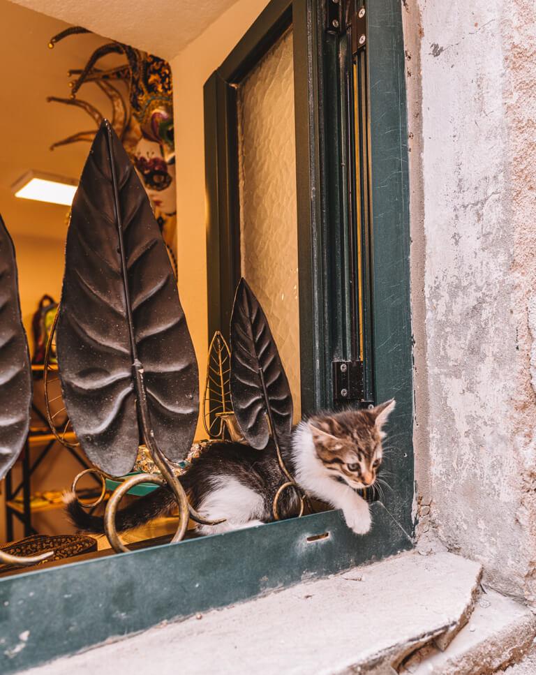Katze Montenegro
