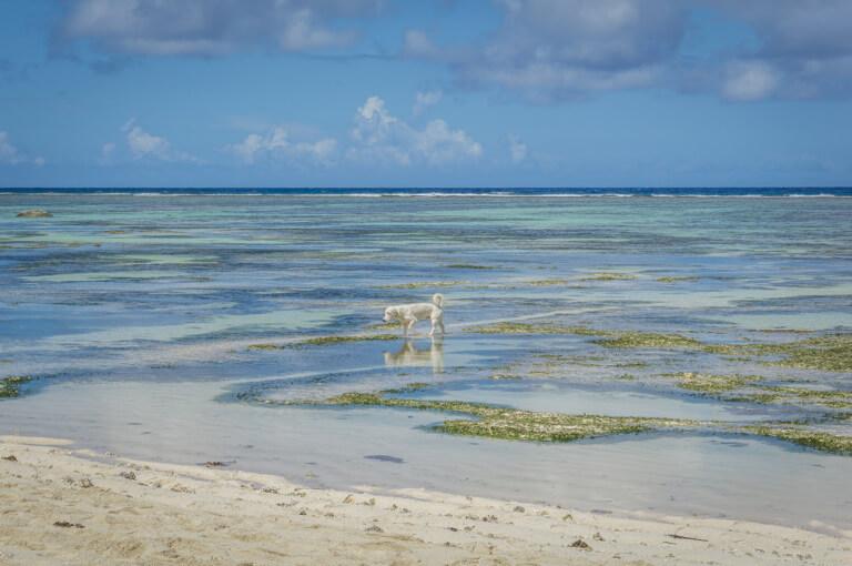 Anse Source d Argent Indischer Ozean