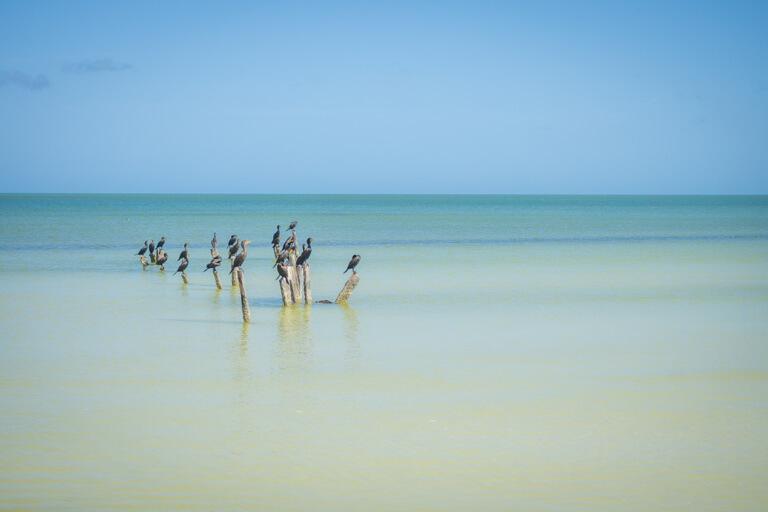Holbox Mexiko Punta Cocos Vogelschutzgebiet