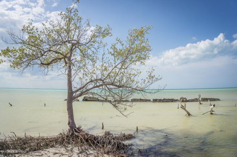 Isla Holbox Mexiko Punta Mosquito Ebbe