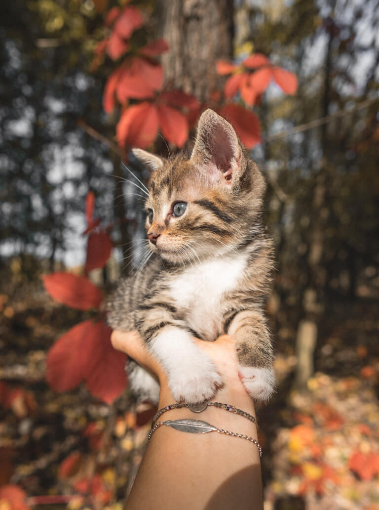 Katzenbaby Herbst