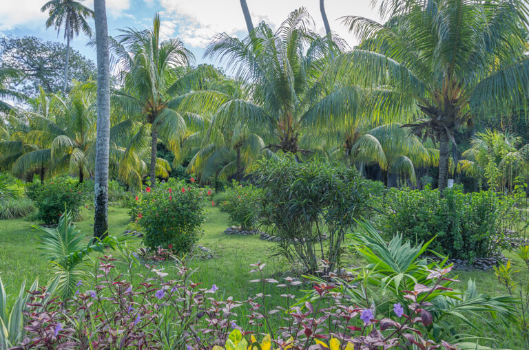 L Union Estate Farm Kokosnusspalmen