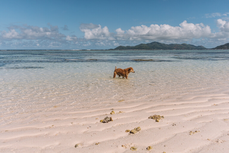 La Digue Seychellen Strand