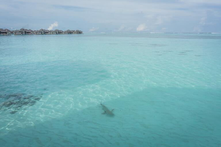 Malediven Inseln Lagune Hai