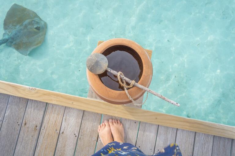 Malediven Inseln Lagune Rochen