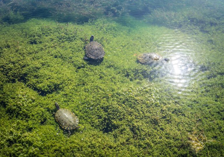 Mexiko Insidertipps Cenote Tulum