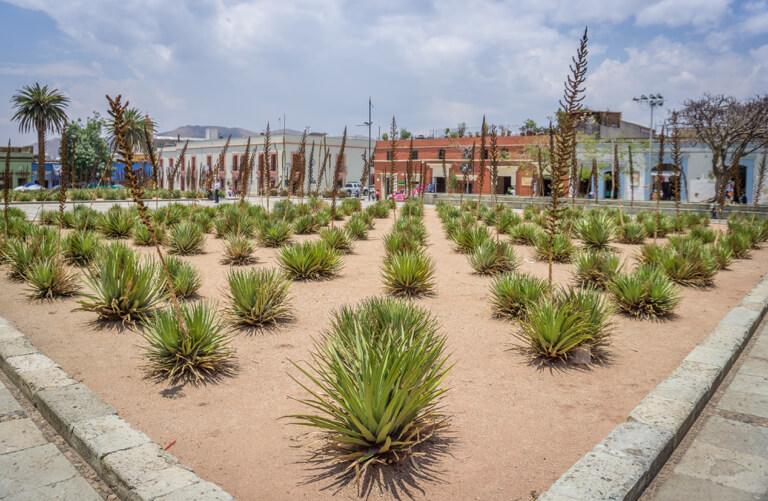 Oaxaca de Juarez Botanischer Garten