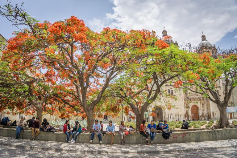 Park Templo Santo Domingo