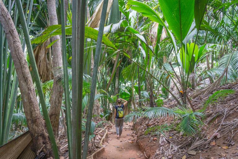 Praslin Seychellen Valle de Mai