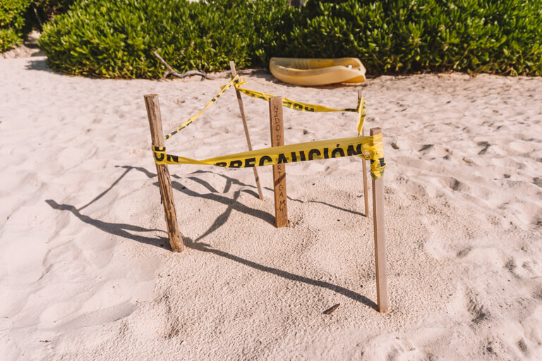 Punta Allen Schildkroeten Nest Strand