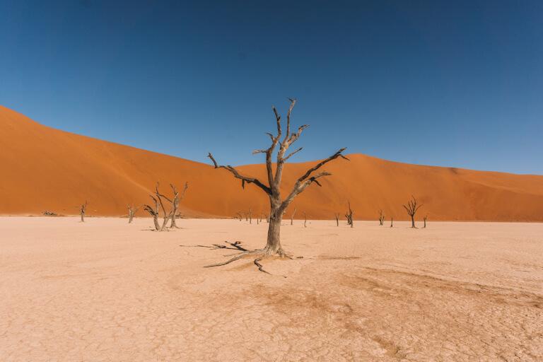 Sossusvlei Namibia Deadvlei Kameldornbaum