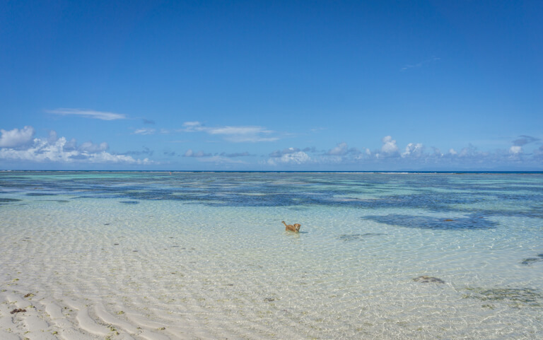 Strand Hund