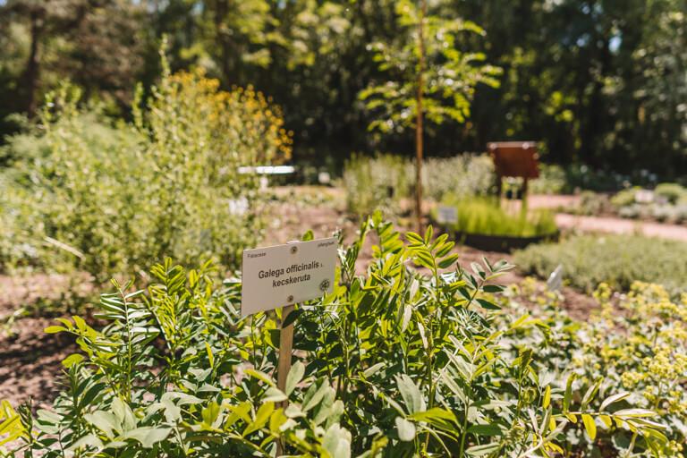 Szeged Botanischer Garten Kraeuter