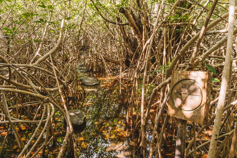 Tulum Mexiko Cenote